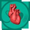 УЗИ сердца